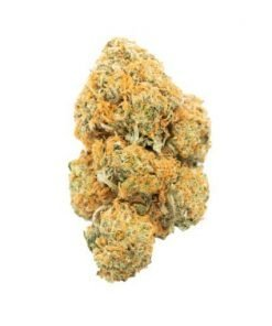 Moby Dick | Sativa