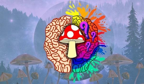 Magic Mushrooms: What Effects Do They Have On My Brain